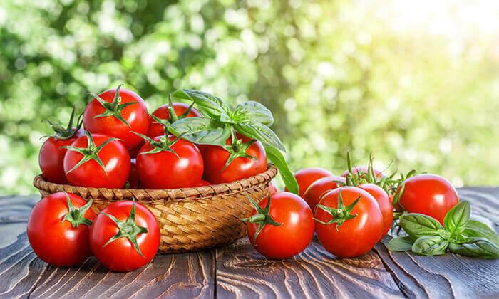 3 קטיף עגבניות שרי במשק אקלר, קדימה