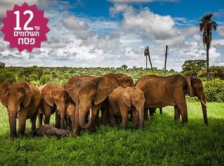 טיול מאורגן - דרום אפריקה