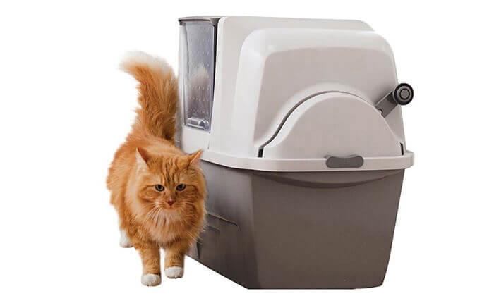 3 שירותים אוטומטיים לחתול סמארט סיפט