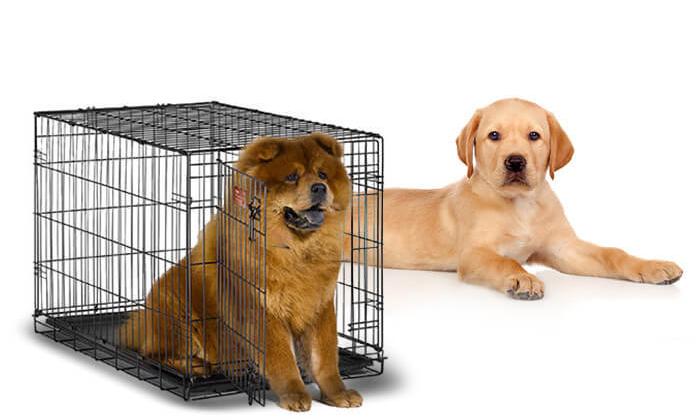 3 כלוב אילוף לכלב