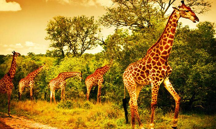 7 טיול מאורגן 10 ימים בדרום אפריקה
