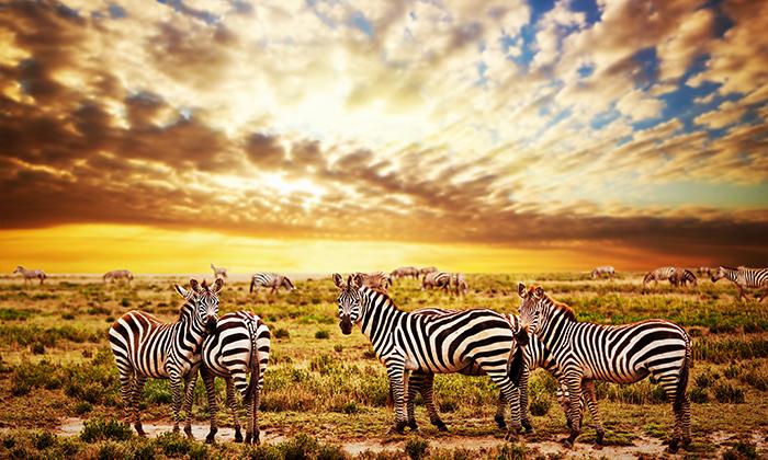 2 טיול מאורגן 10 ימים בדרום אפריקה