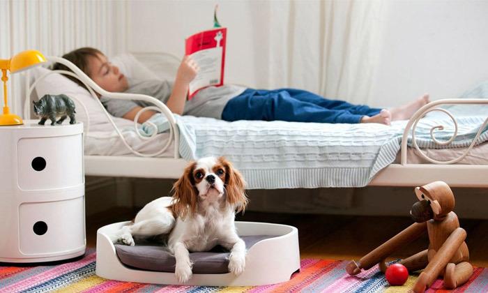 4 מנשא ומיטה לחיות מחמד BUNKBED 3 IN 1 של כתר