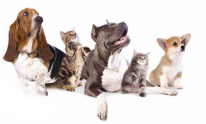 7 שובר הנחה לרכישת מוצרים ומזון לבעלי חיים באניפט - איסוף מסניפי הרשת בפריסה ארצית