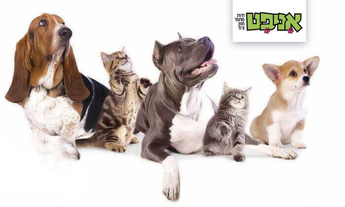2 שובר הנחה לרכישת מוצרים ומזון לבעלי חיים באניפט - איסוף מסניפי הרשת בפריסה ארצית