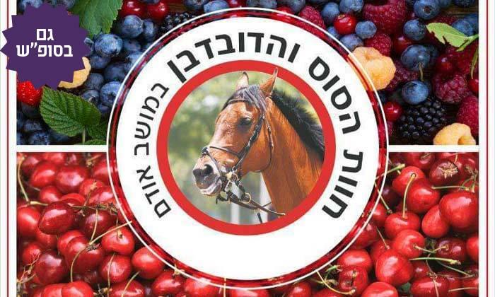 6 קטיף דובדבנים ופירות יער בחוות הסוס והדובדבן, מושב אודם